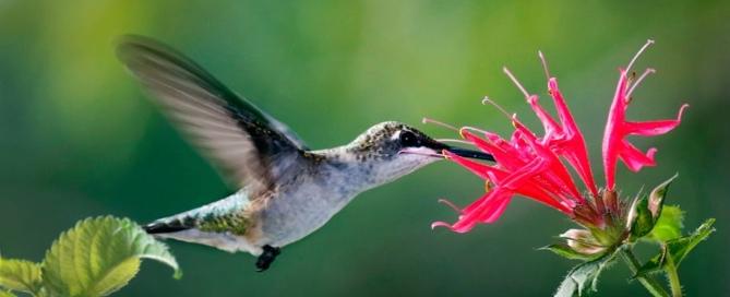 Ruby-throated-Hummingbird-photo-by-Teresa-Gemeinhardt