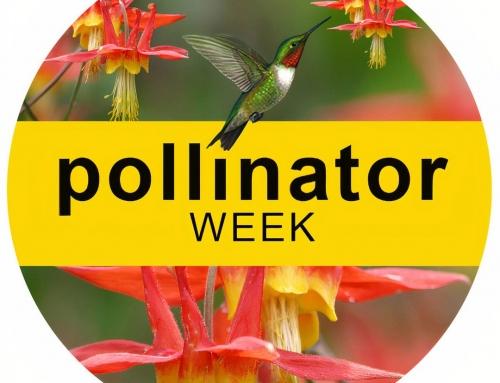 Happy Pollinator week…